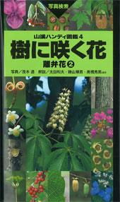 樹に咲く花 離弁花2