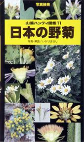 日本の野菊