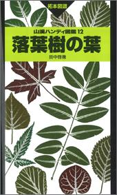 落葉樹の葉