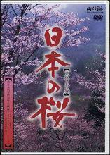 日本の桜(東日本編)