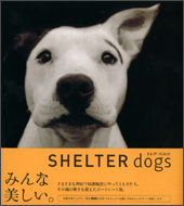 SHELTER dogs シェルタードッグズ