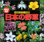増補改訂新版 日本の野草