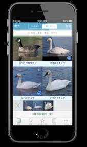 iOSアプリ『山溪ハンディ図鑑 日本の野鳥』