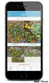 iOSアプリ『山溪ハンディ図鑑 野に咲く花 増補改訂新版』