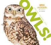 カレンダー2017 OWLS! 世界のふくろうたち