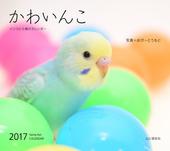 カレンダー2017 かわいんこ インコと小鳥のカレンダー