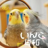 カレンダー2017 週めくりカレンダー いんこ日和  卓上