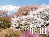 カレンダー2018 今森光彦が見つめるニッポンの里山