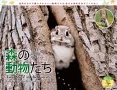 カレンダー2019 太田達也セレクション 森の動物たち Tiny Story in the Forests
