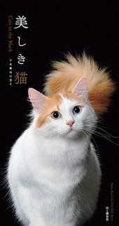 カレンダー2019 美しき猫 Cats in the Black