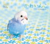 カレンダー2020 かわいんこ インコと小鳥のカレンダー