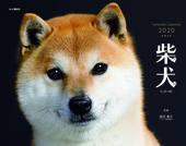カレンダー2020 柴犬