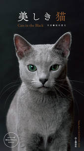 カレンダー2020 美しき猫 Cats in the Black