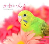カレンダー2022 かわいんこ インコと小鳥のカレンダー